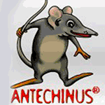 Antechinus JavaScript Editor 10 + Crack